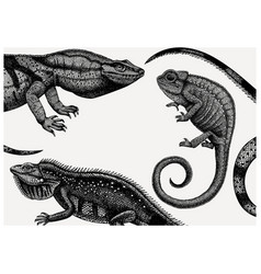 hand sketched reptiles design exotic animal vector image