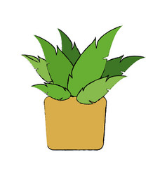 potted plant decoration botanic natural vector image