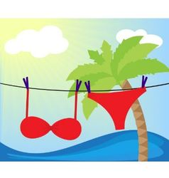 swimsuit dried vector image vector image
