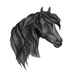 Arabian horse head sketch for equine sport design vector