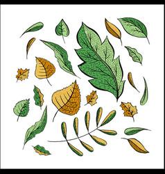 autumn leaves color set vector image