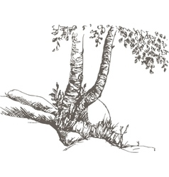 Birch trunks and rocks vector