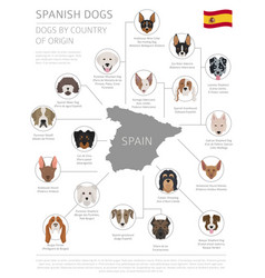 Dogs country origin spanish dog breeds vector