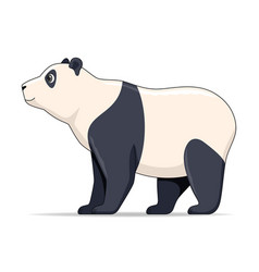 giant panda animal standing on a white background vector image