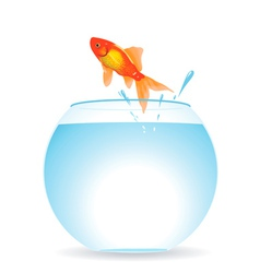 gold fish jumps vector image