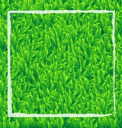 Realistic green grass background vector image