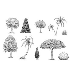 set trees palm trees and bushes hand drawn vector image