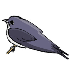 Swallow symbol of springtime vector