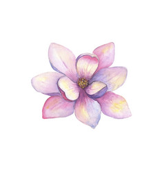 watercolor beautiful magnolia flower isolated vector image
