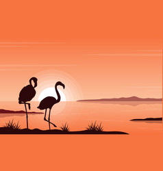 silhouette flamingo on lake landscape vector image