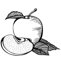 Apple monochrome drawing vector image vector image