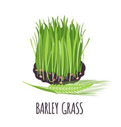 barley grass icon in flat style isolated on white vector image