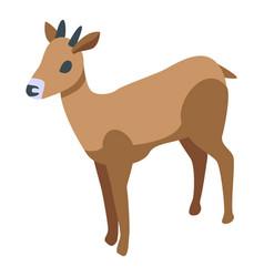Oryx gazelle icon isometric style vector