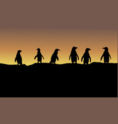 Silhouette of penguin at sunset landscape vector