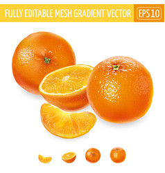 Whole and sliced oranges on a white background vector