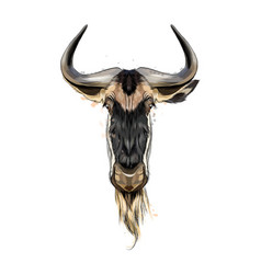 wildebeest head portrait from a splash of vector image