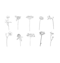 hand drawn wild flowers in summer vector image