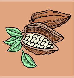 cocoa bean hand drawn sketch doodle food vector image