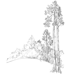 pine trees and forest vector image vector image
