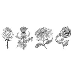 wedding botanical flowers in the garden or spring vector image