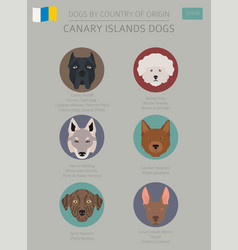 Dogs by country of origin spain canary islands vector