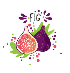 hand draw colored fig purple vector image