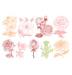 set of wedding botanical flowers in the garden or vector image