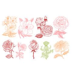 set wedding botanical flowers in garden or vector image