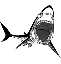 Shark fish head symbol for mascot vector