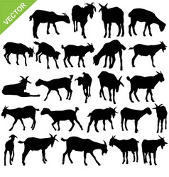 Goat silhouettes vector image vector image