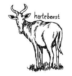 hartebeest - sketch hand drawn vector image vector image
