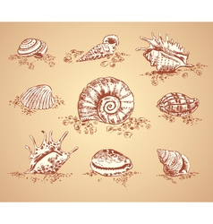 Collection graphic images seashell set vector image