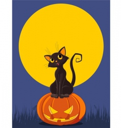 halloween cat on pumpkin vector image