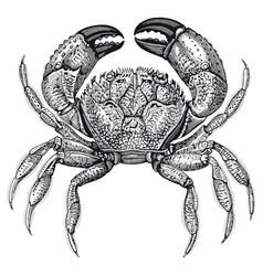 high detail crab engraving vector image