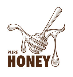 pure honey dripping around a dipper sketch art vector image