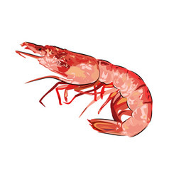 Red boiled shrimp realistic seafood picture vector