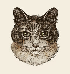 Drawn portrait of cute kitten cat animal pet vector