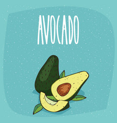 isolated ripe avocado fruits whole and cut vector image