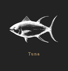 tuna on black background fish vector image