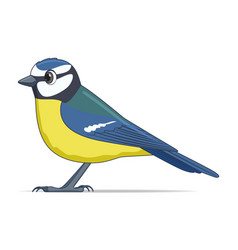 blue tit bird on a white background vector image