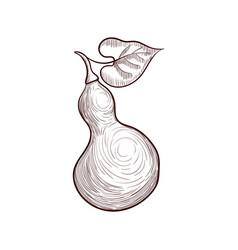 Drawing bottle gourd vector