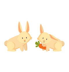 rabbit eating carrots closeup vector image