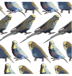 Seamless background with budgerigars vector