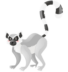 Wild lemur on white background vector