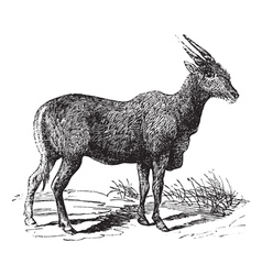 South African antelope engraving vector image