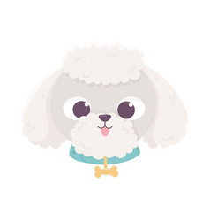 Cute face dog poodle collar with bone domestic vector