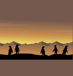 landscape of penguin at sunset silhouettes vector image