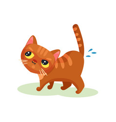 naughty kitten peeing on the floor mischievous vector image