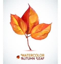 Watercolor autumn leaf of vector