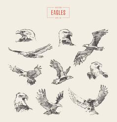 set realistic eagles hand drawn sketch vector image